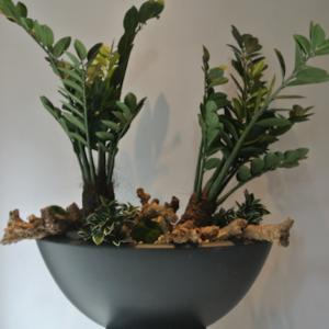 Dirkx Plantenarrangement