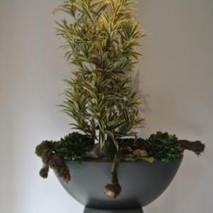 Dirkx Plantenarrangement Dracaena variegata