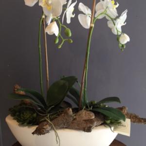 Dirkx Plantenbak met Phalaenopsis