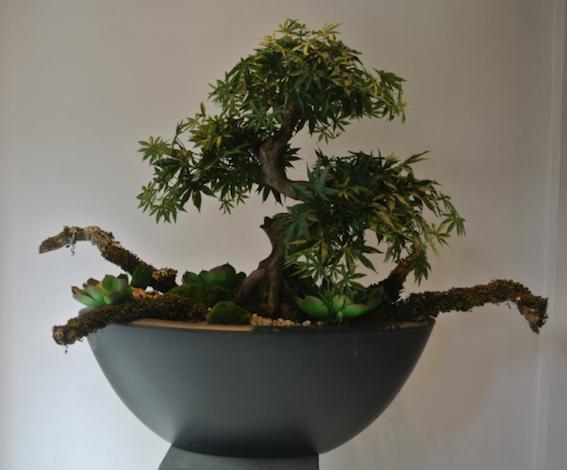 Dirkx Plantenarrangement Acer Bonsai