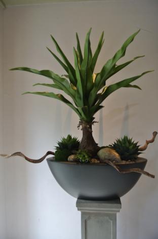 Dirkx Plantenbak Dracaena