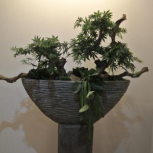 Dirkx Plantenbak Bonsai
