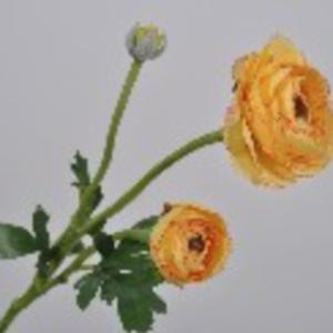 Dirkx Ranonkel geel